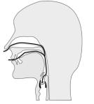 Figure 3: French nasal õ
